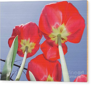 Wood Print featuring the photograph Tulips by Elvira Ladocki