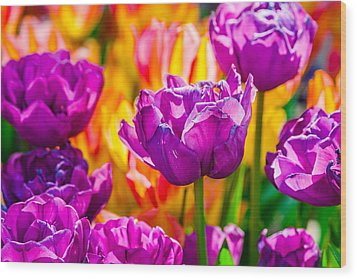 Wood Print featuring the photograph Tulips Enchanting 41 by Alexander Senin