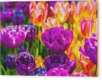 Wood Print featuring the photograph Tulips Enchanting 42 by Alexander Senin