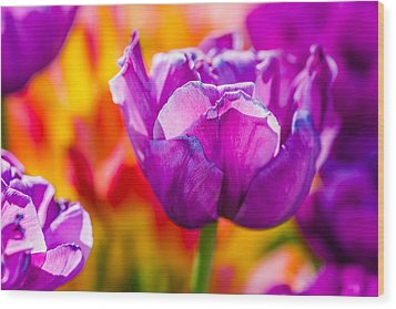 Wood Print featuring the photograph Tulips Enchanting 43 by Alexander Senin