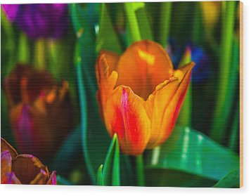 Wood Print featuring the photograph Tulips Enchanting 44 by Alexander Senin