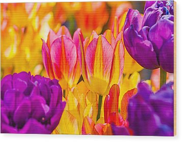 Wood Print featuring the photograph Tulips Enchanting 45 by Alexander Senin