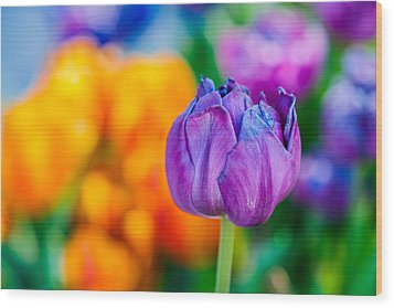 Wood Print featuring the photograph Tulips Enchanting 46 by Alexander Senin