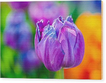 Wood Print featuring the photograph Tulips Enchanting 47 by Alexander Senin
