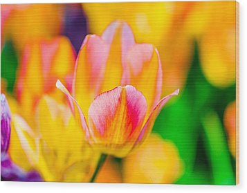 Wood Print featuring the photograph Tulips Enchanting 48 by Alexander Senin