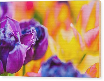 Wood Print featuring the photograph Tulips Enchanting 49 by Alexander Senin