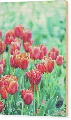 Tulips In Amsterdam Wood Print