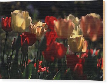 Wood Print featuring the photograph Tulips In Morning Light by Michael Flood