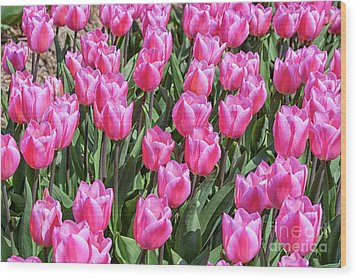 Wood Print featuring the photograph Tulips In Pink Color by Patricia Hofmeester