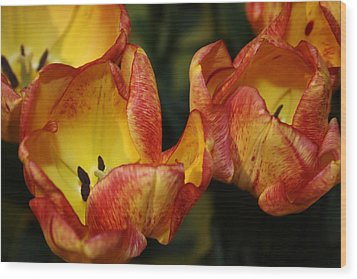 Tulips In The Morning Wood Print by Bruce Bley