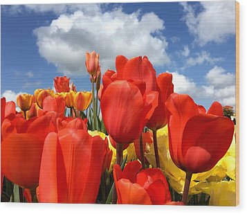 Tulips In The Sky Wood Print