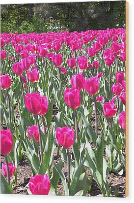 Wood Print featuring the photograph Tulips by Mary-Lee Sanders