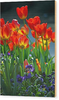 Tulips Wood Print by Robert Meanor