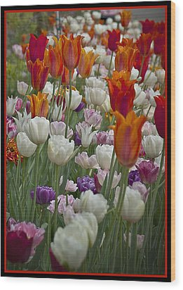 Tulips... Tulips... Everywhere Wood Print