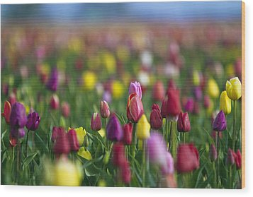 Wood Print featuring the photograph Tulips by William Lee