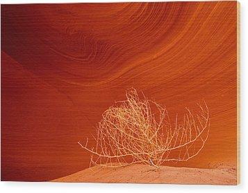 Tumbleweed Wood Print