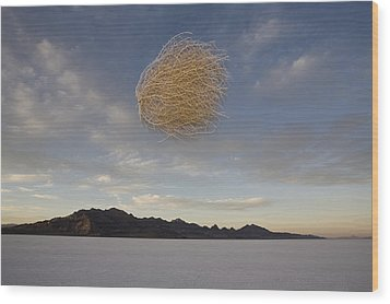Tumbleweed In Mid Air Wood Print by John Burcham