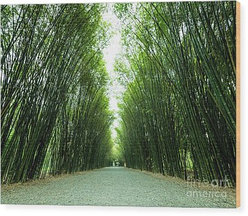 Tunnel Bamboo Trees And Walkway. Wood Print by Tosporn Preede