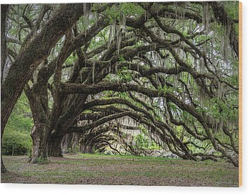 Wood Print featuring the photograph Tunnel In Charleston by Jon Glaser