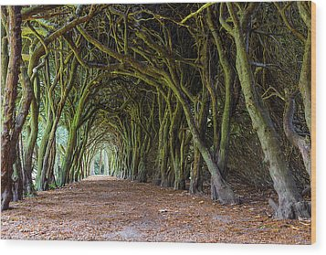Tunnel Of Intertwined Yew Trees Wood Print by Semmick Photo