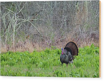 Wood Print featuring the photograph Turkey And Cabbage by Bill Wakeley