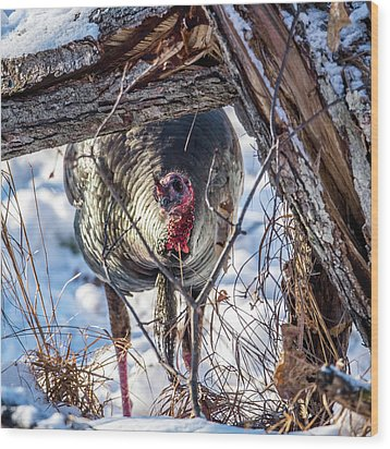 Wood Print featuring the photograph Turkey In The Brush by Paul Freidlund