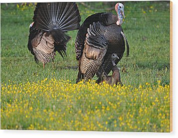 Turkey Love Wood Print by Todd Hostetter