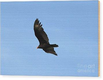 Turkey Vulture Wood Print by David Lee Thompson