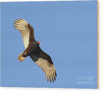 Turkey Vulture Wood Print by Debbie Stahre