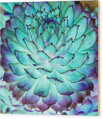 Wood Print featuring the photograph Turquoise Succulent 1 by Marianne Dow