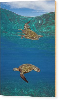 Turtle And Sky Wood Print