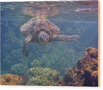 Turtle Approaching Wood Print by Bette Phelan