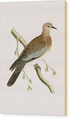 Turtle Dove Wood Print by English School