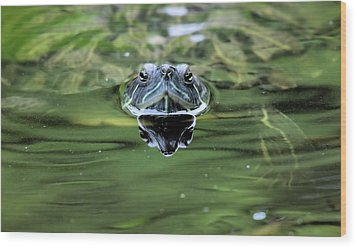 Turtle Head Wood Print by Karol Livote