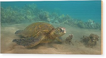 Turtle Magic Wood Print by Brian Governale