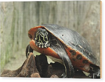 Turtle Neck Wood Print