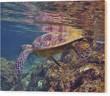 Turtle Reflections Wood Print by Bette Phelan