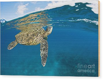 Turtle Taking A Breath Wood Print by Dave Fleetham - Printscapes
