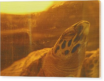 Turtled Wood Print by Jez C Self
