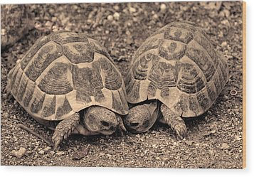 Wood Print featuring the photograph Turtles Pair by Gina Dsgn