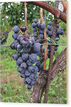 Tuscan Grapes Wood Print