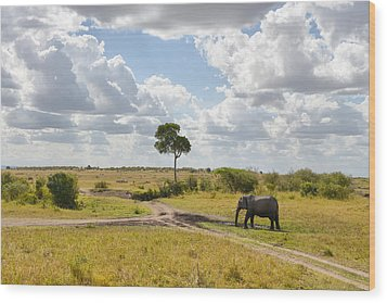 Tusker Scape Wood Print