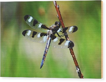 Wood Print featuring the photograph Twelve Spotted Skimmer by Rodney Campbell