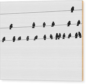 Twenty Blackbirds Wood Print by Angie Rea