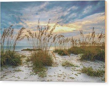 Twilight Sea Oats Wood Print by Steven Sparks