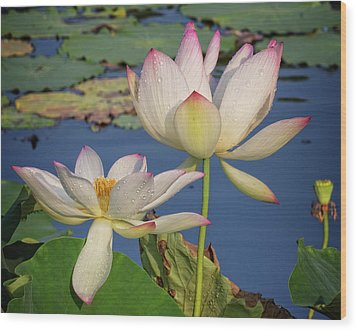 Wood Print featuring the photograph Twin Blooms by Robert Pilkington