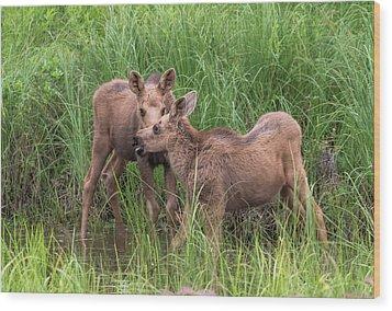 Twin Moose Playing In The Water Wood Print
