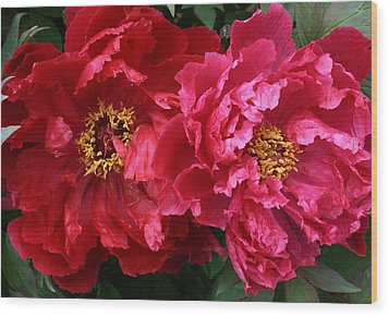 Twin Peonies Wood Print by Bruce Bley