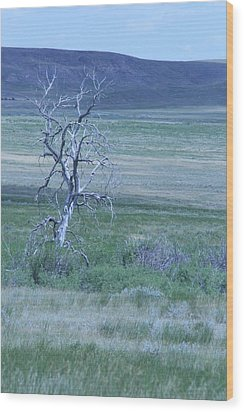 Wood Print featuring the photograph Twisted And Free by Mary Mikawoz