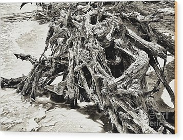 Twisted Driftwood Wood Print